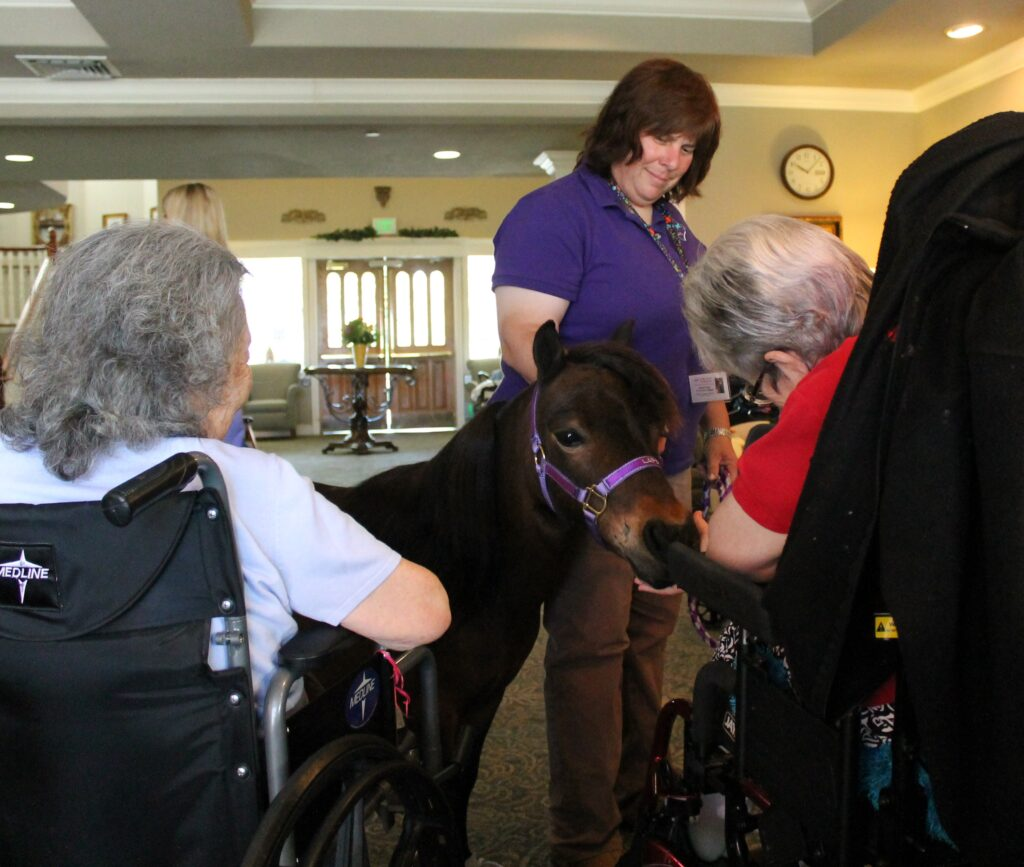 A brown miniature horse visits with clients at a senior facility. His handler stands beside him.