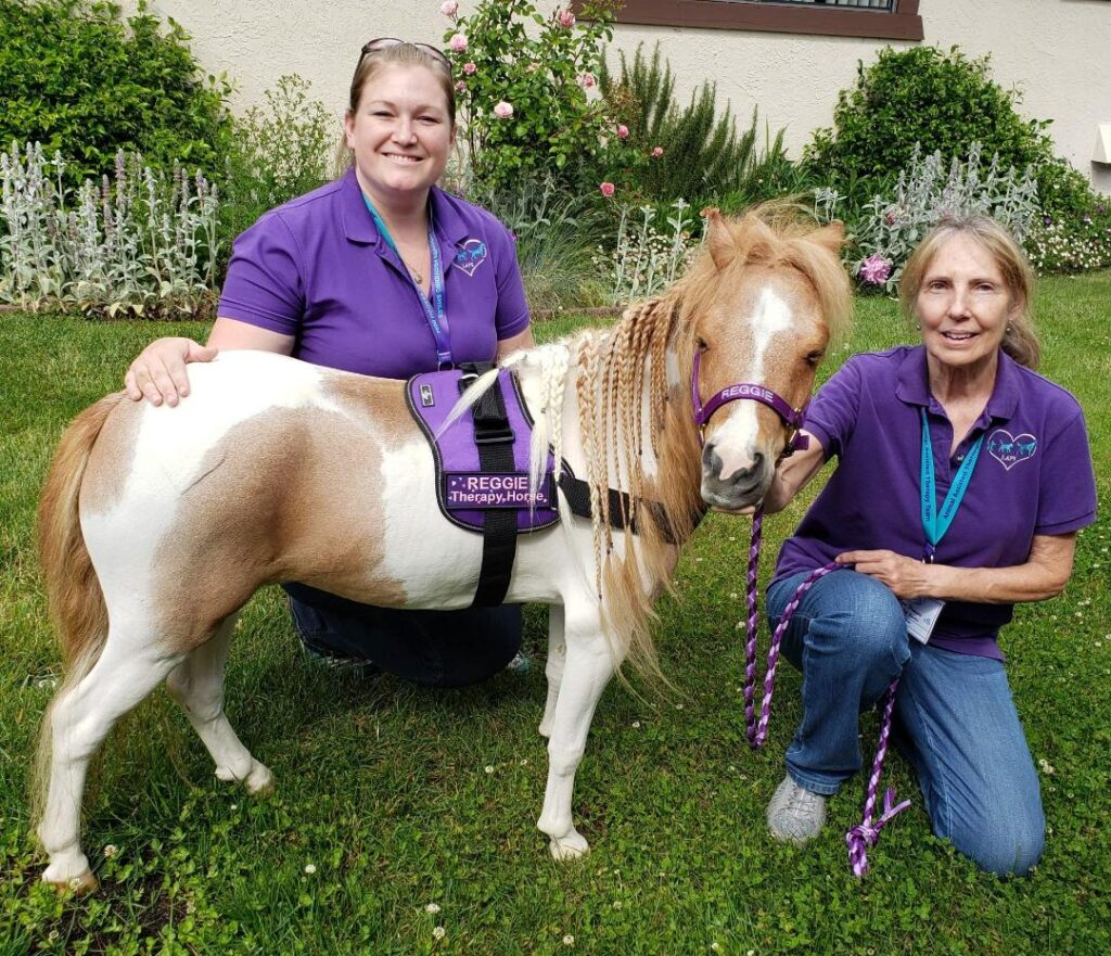 A palomino mini horse poses for the camera with his two LAPS handlers. The handlers kneel beside him.